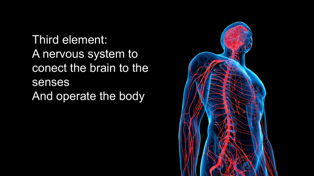 Third element: A nervous system to conect the b...