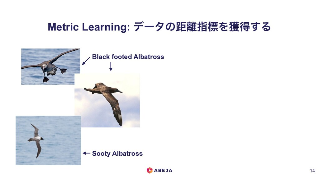 Metric Learning: σʔλͷڑ཭ࢦඪΛ֫ಘ͢Δ !14 Black footed...