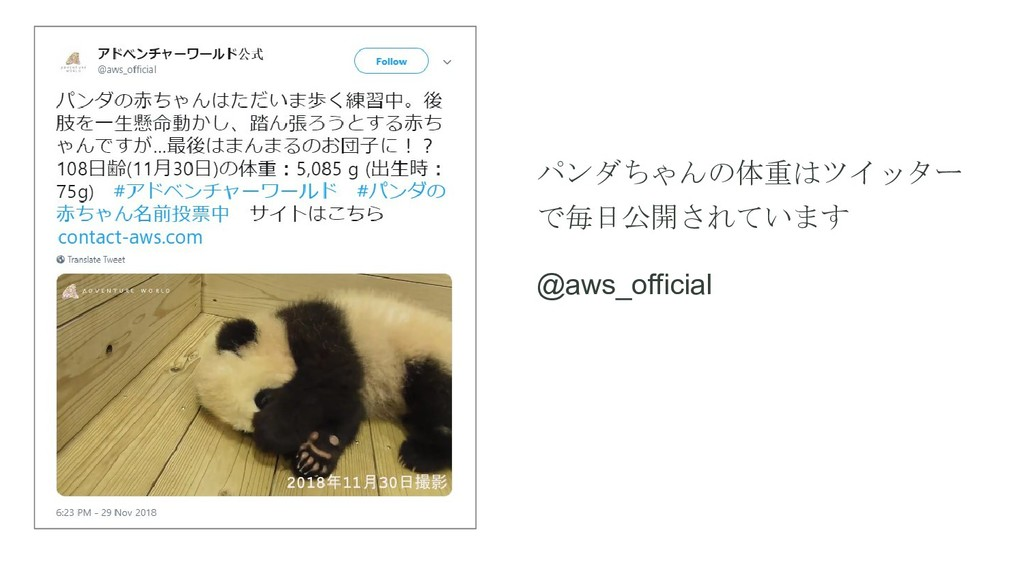 パンダちゃんの体重はツイッター で毎日公開されています @aws_official
