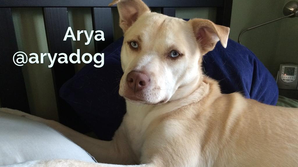 Arya @aryadog