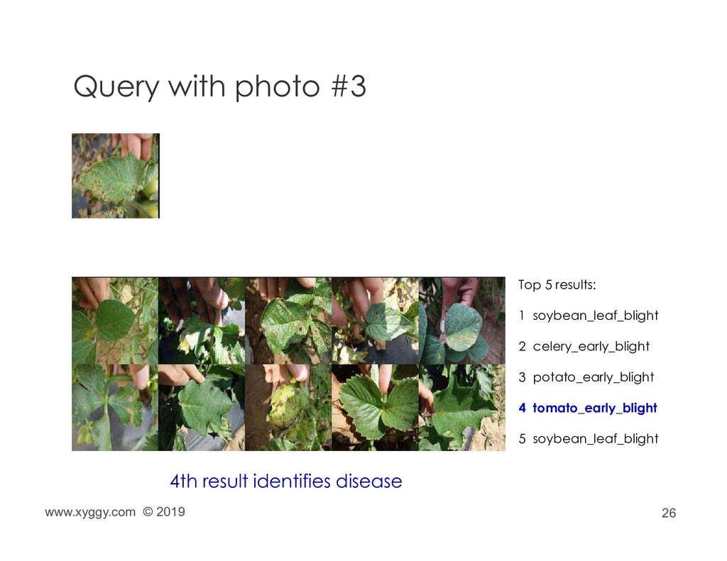 26 Query with photo #3 Top 5 results: 1 soybean...