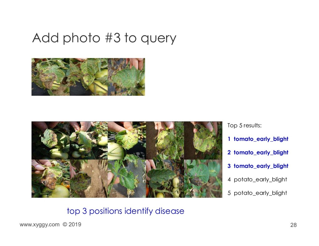 28 Add photo #3 to query top 3 positions identi...