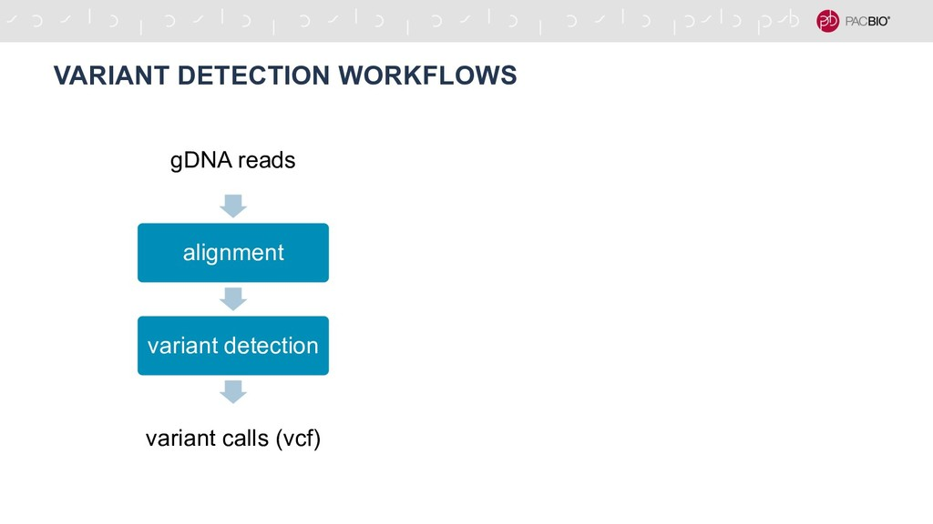 gDNA reads alignment variant detection variant ...