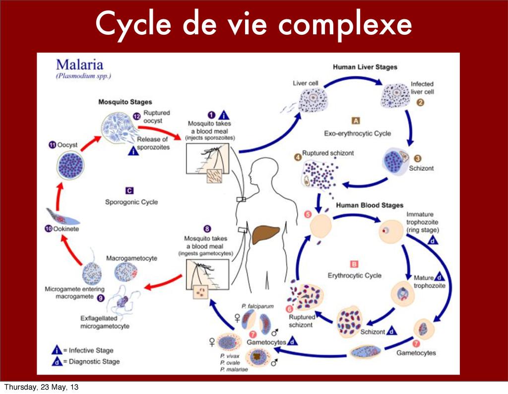 Cycle de vie complexe Thursday, 23 May, 13