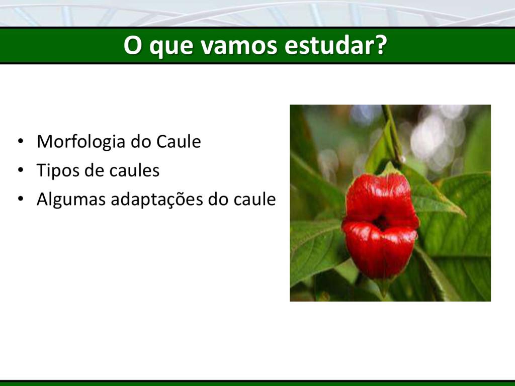 • Morfologia do Caule • Tipos de caules • Algum...