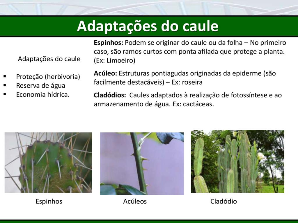 Adaptações do caule  Proteção (herbivoria)  R...
