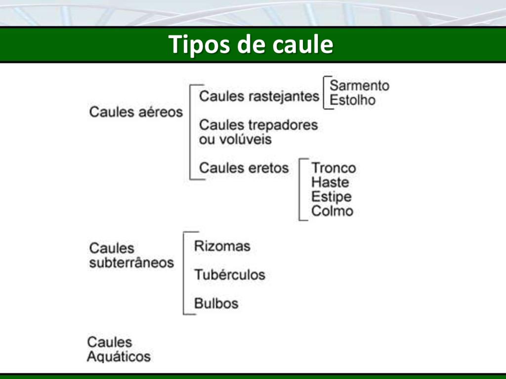 Tipos de caule