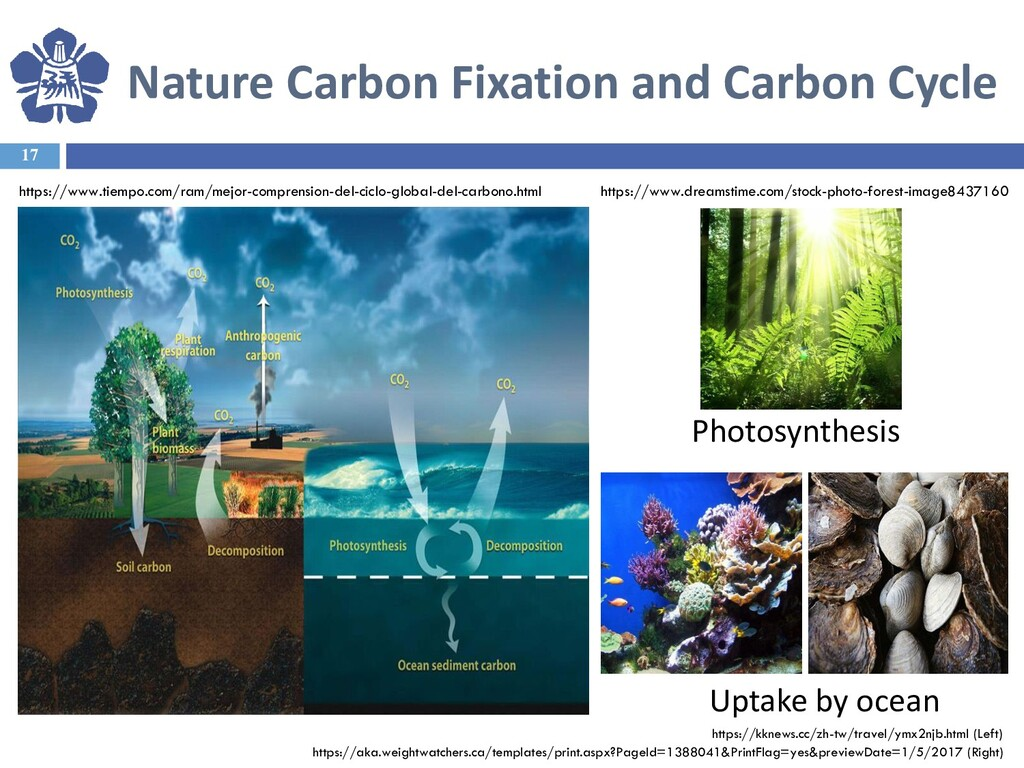 Nature Carbon Fixation and Carbon Cycle 17 Upta...