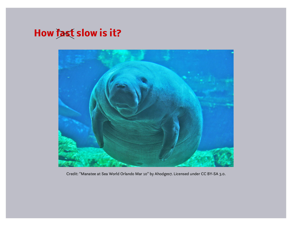 """How fast slow is it? Credit: """"Manatee at Sea Wo..."""