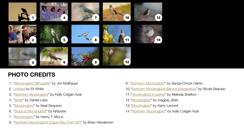 "PHOTO CREDITS 1. ""Mockingbird Silhouette"" by Ji..."