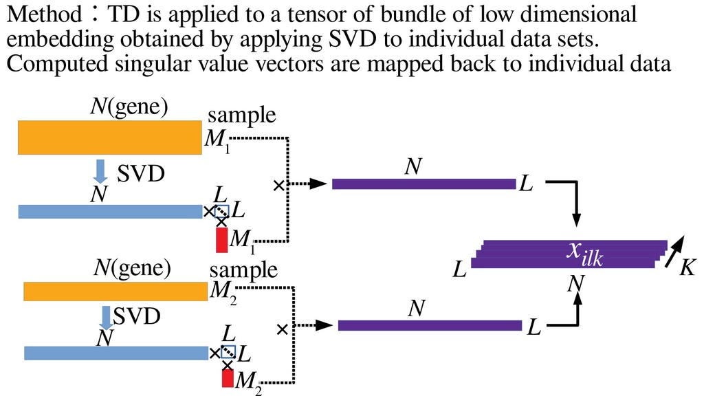 Method:TD is applied to a tensor of bundle of l...