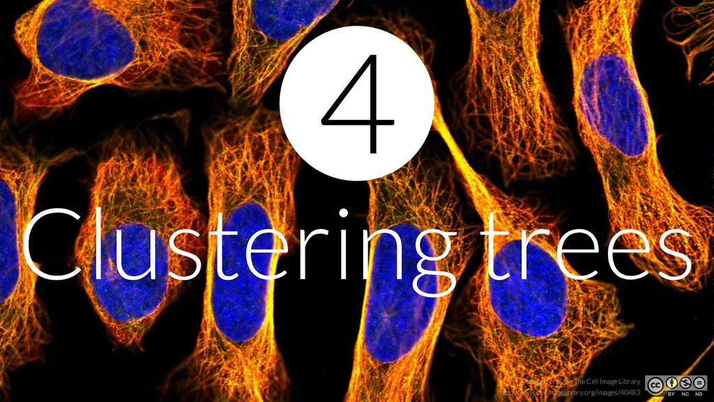 Clustering trees 4 http://www.cellimagelibrary....