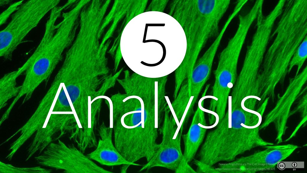 Analysis Natalie Prigozhina via The Cell Image ...