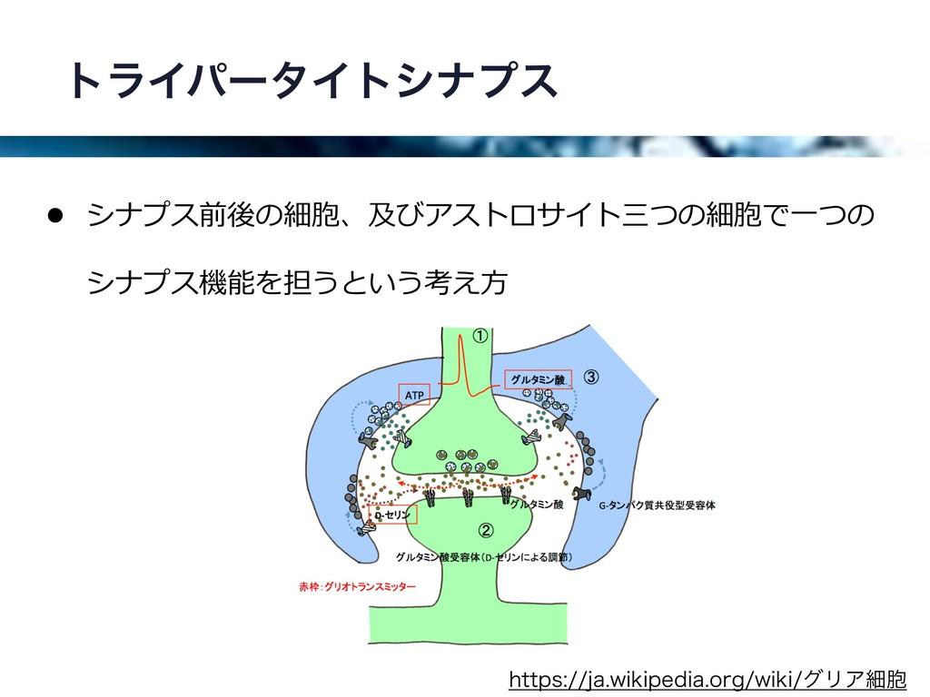 τϥΠύʔλΠτγφϓε • シナプス前後の細胞、及びアストロサイト三つの細胞で⼀つの シナプ...