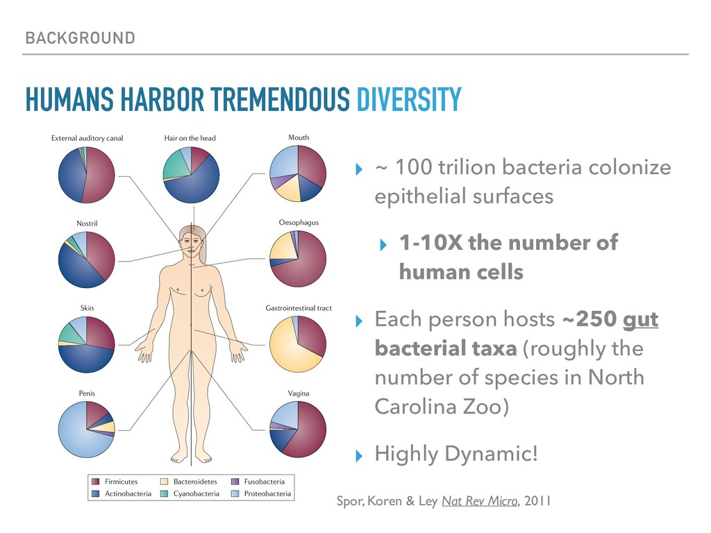 BACKGROUND HUMANS HARBOR TREMENDOUS DIVERSITY ▸...