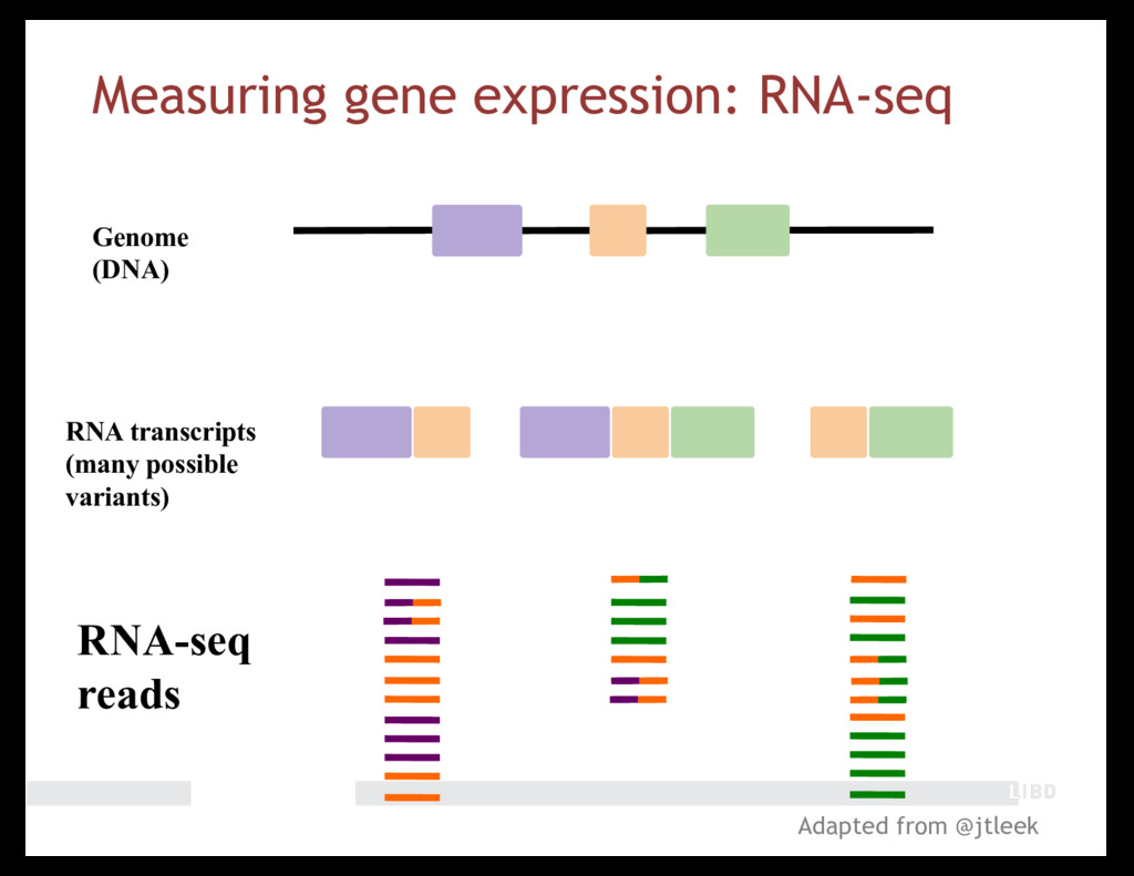 RNA-seq reads Genome (DNA) RNA transcripts (man...