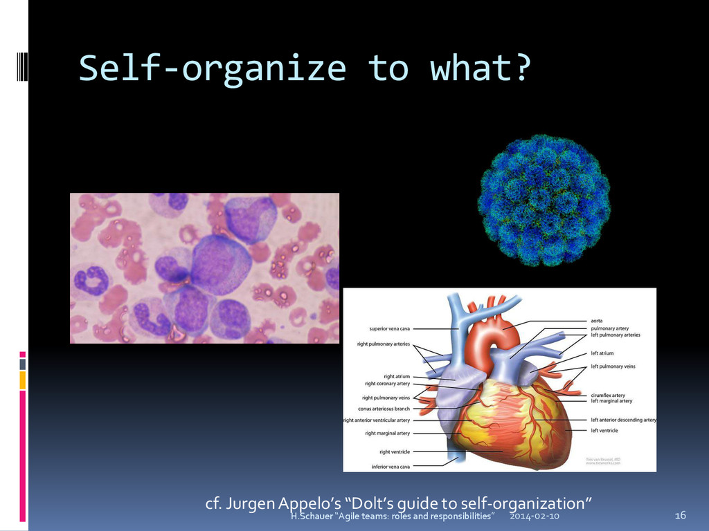 "Self-organize to what? cf. Jurgen Appelo's ""Dol..."
