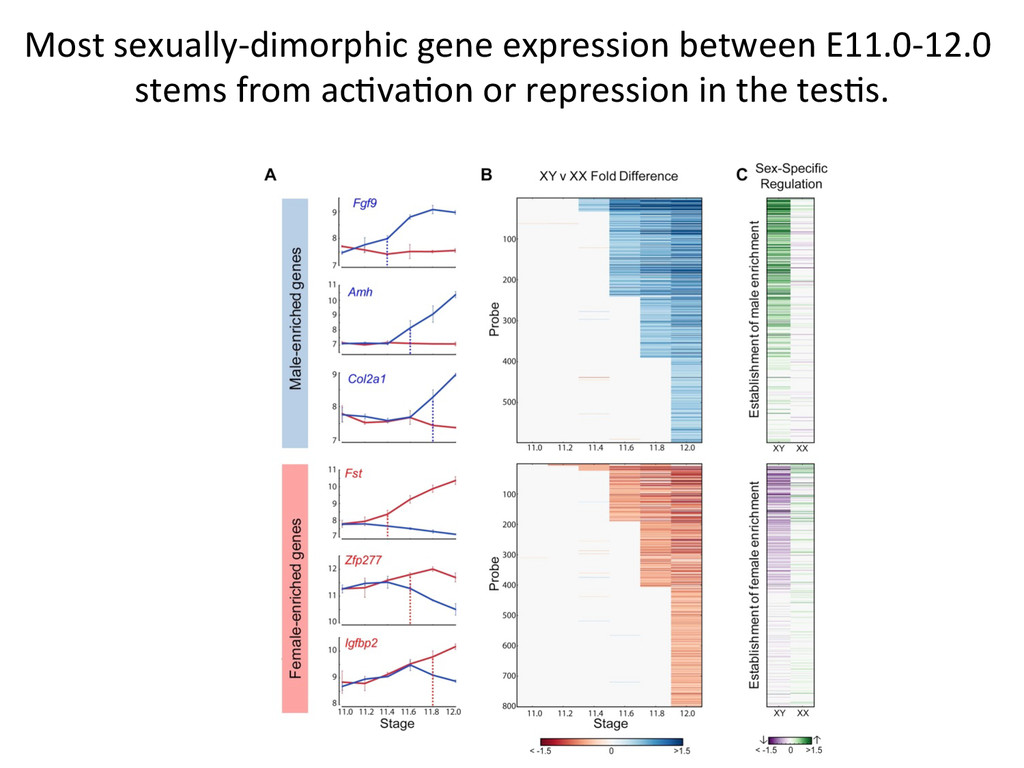 Most sexually-‐dimorphic gene express...