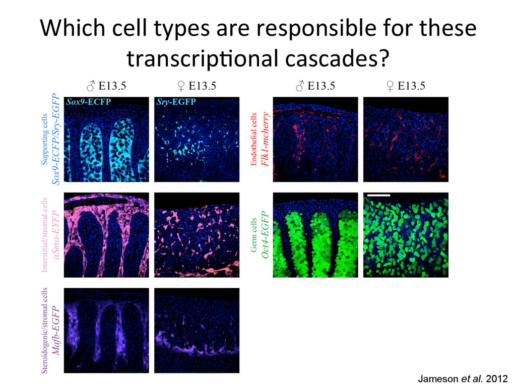 Which cell types are responsible ...