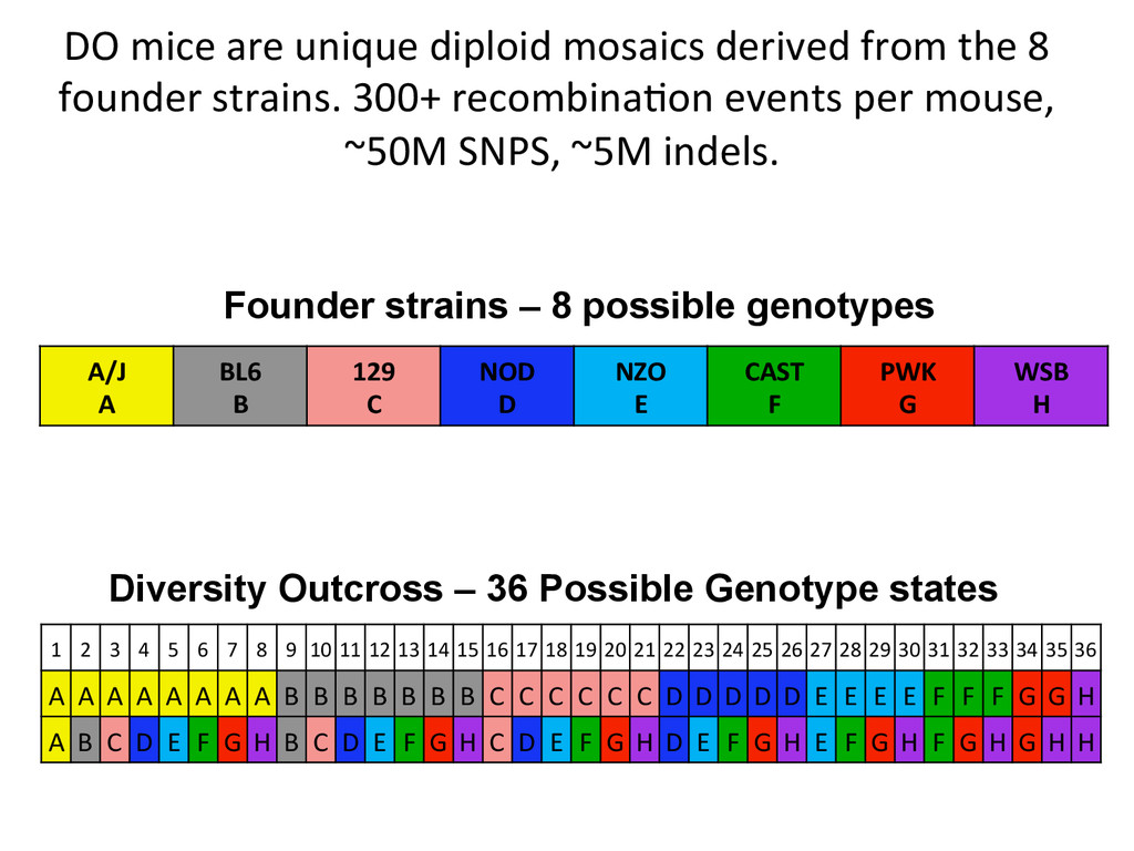 DO mice are unique diploid mosai...