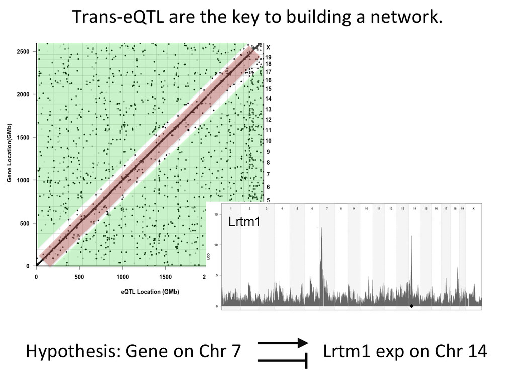 Trans-‐eQTL are the key to buil...