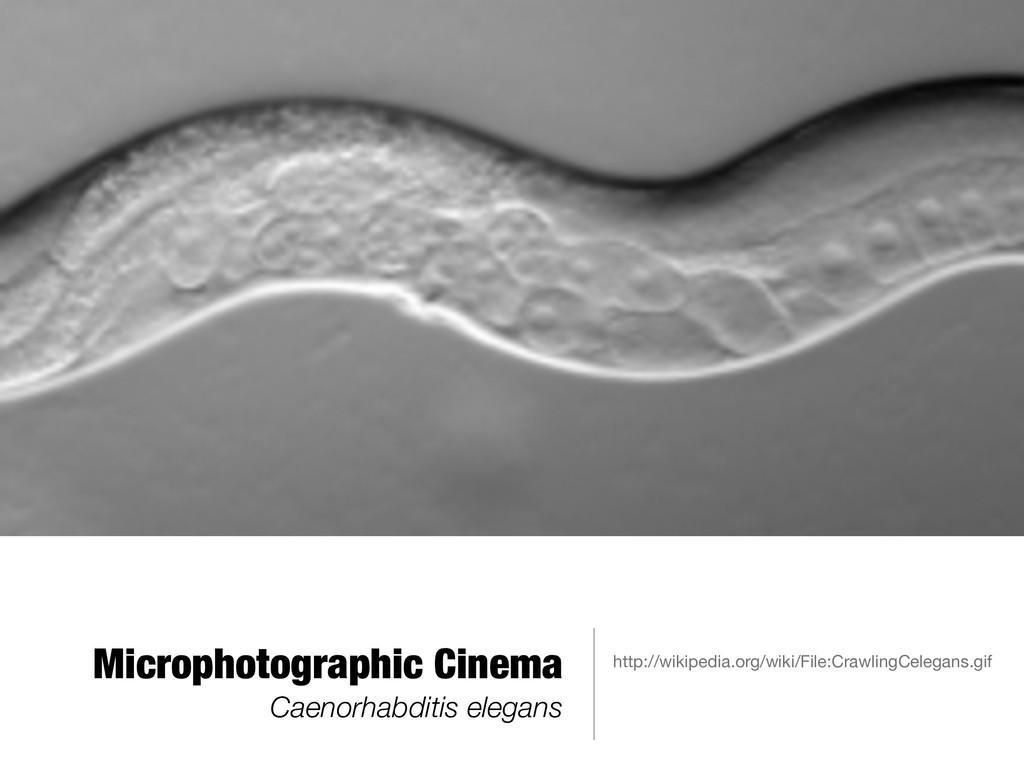 Microphotographic Cinema Caenorhabditis elegans...