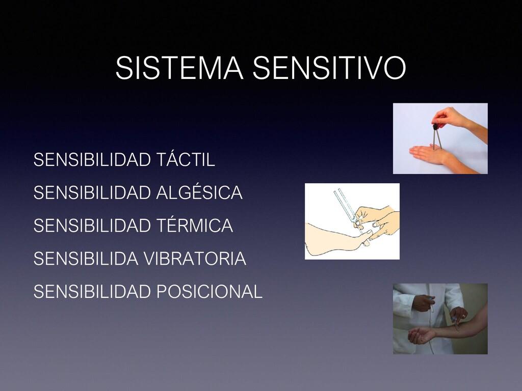 SISTEMA SENSITIVO SENSIBILIDAD TÁCTIL SENSIBILI...
