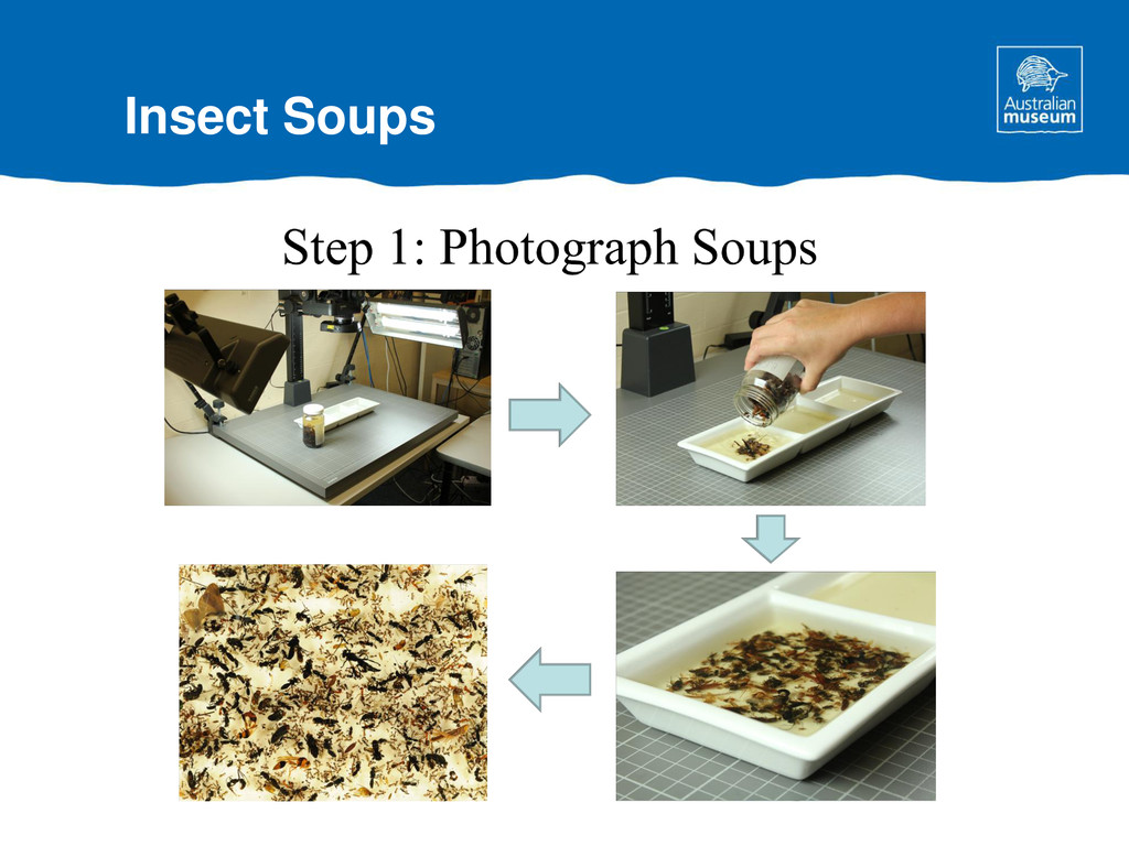 Insect Soups
