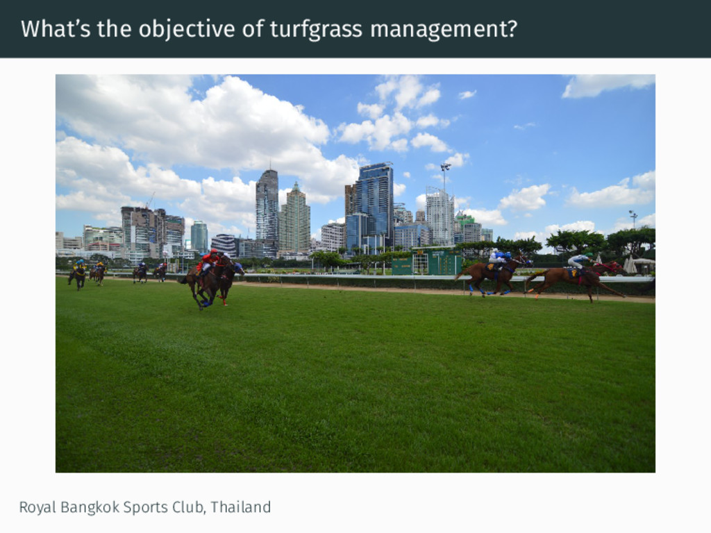 What's the objective of turfgrass management? R...