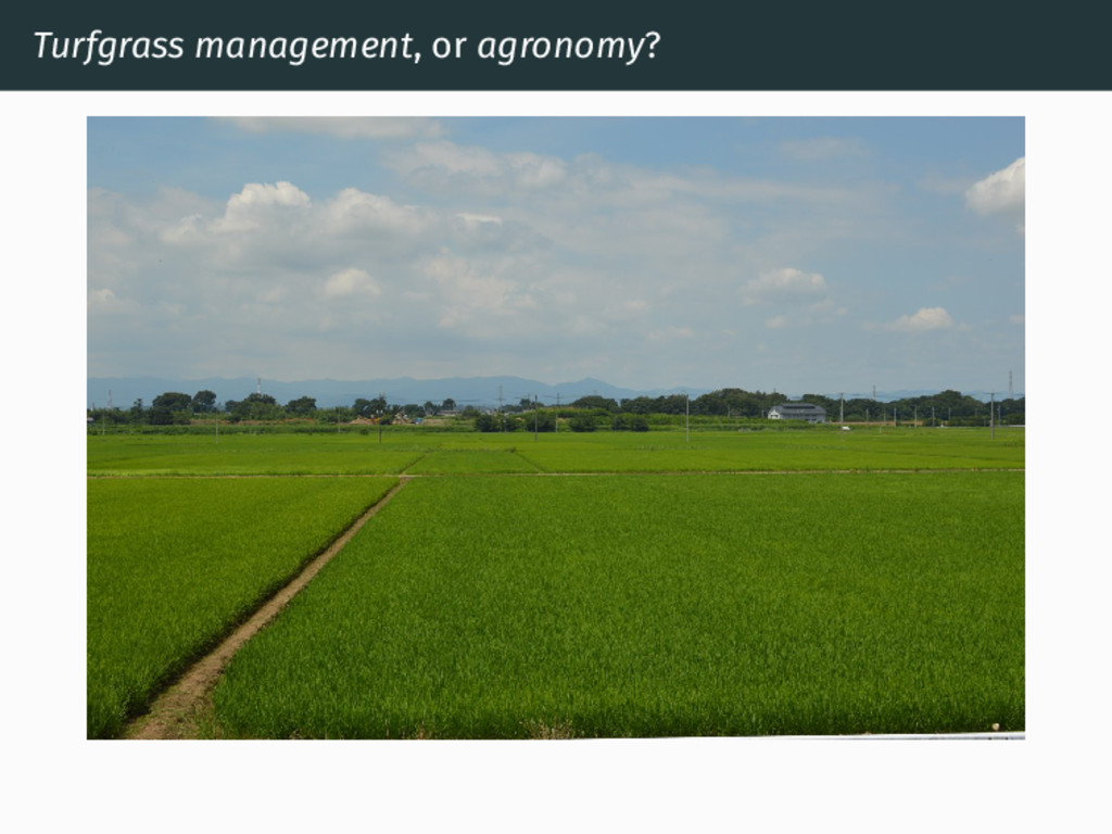Turfgrass management, or agronomy?