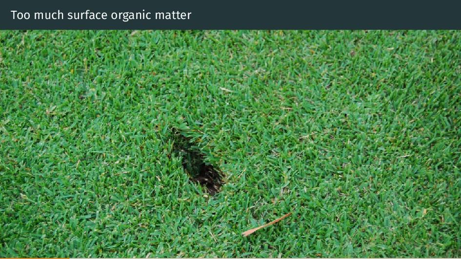 Too much surface organic matter