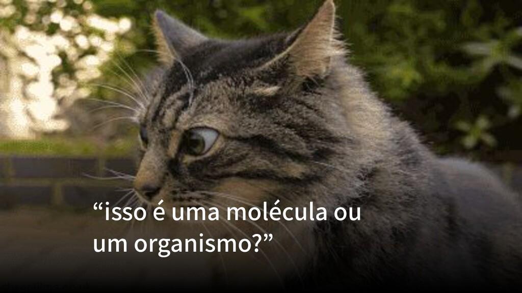 """""""isso é uma molécula ou um organismo?"""""""