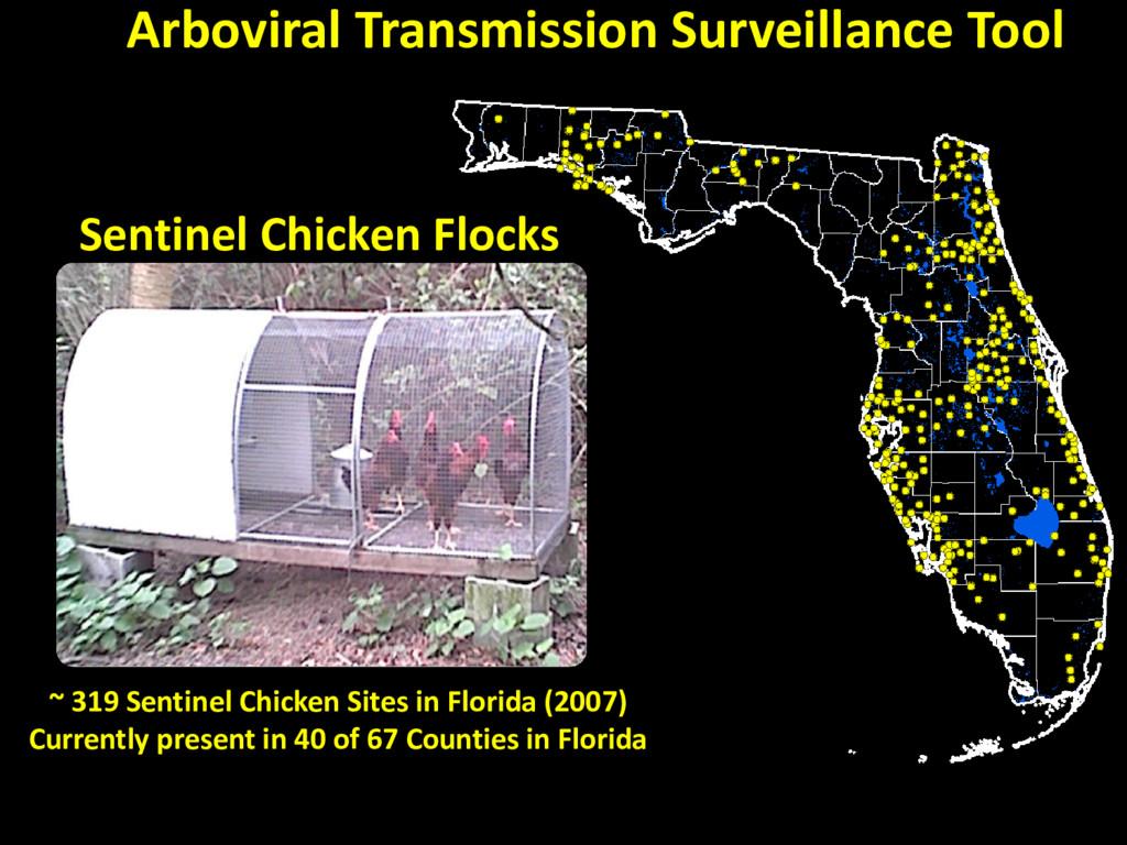 Sentinel Chicken Flocks ~ 319 Sentinel Chicken ...