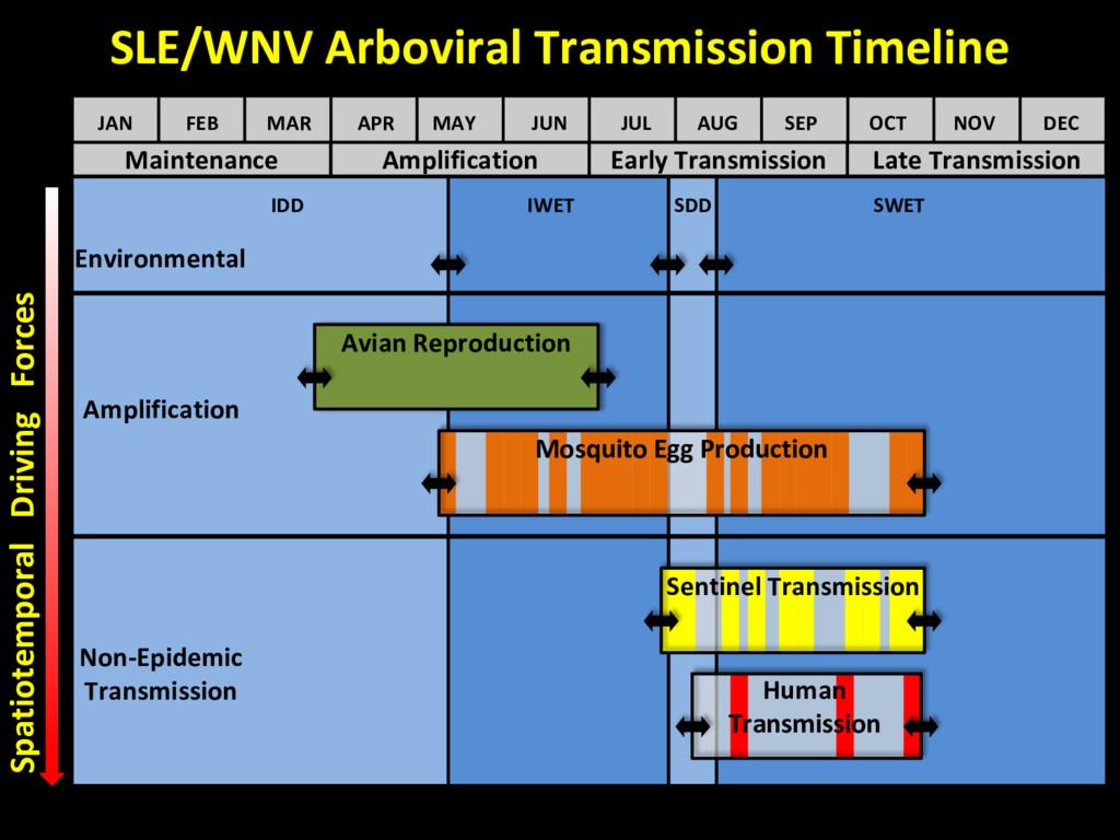 Maintenance Amplification Early Transmission La...