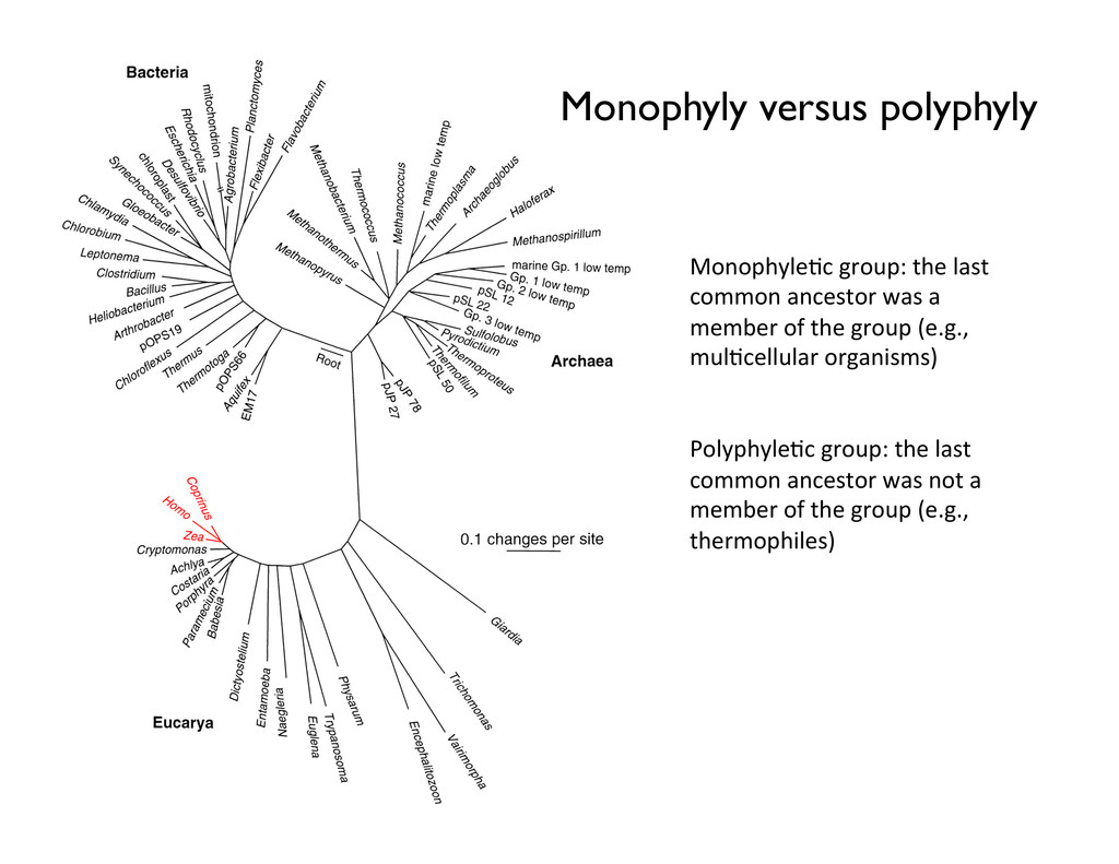 Monophyly versus polyphyly Monophyle2c group...