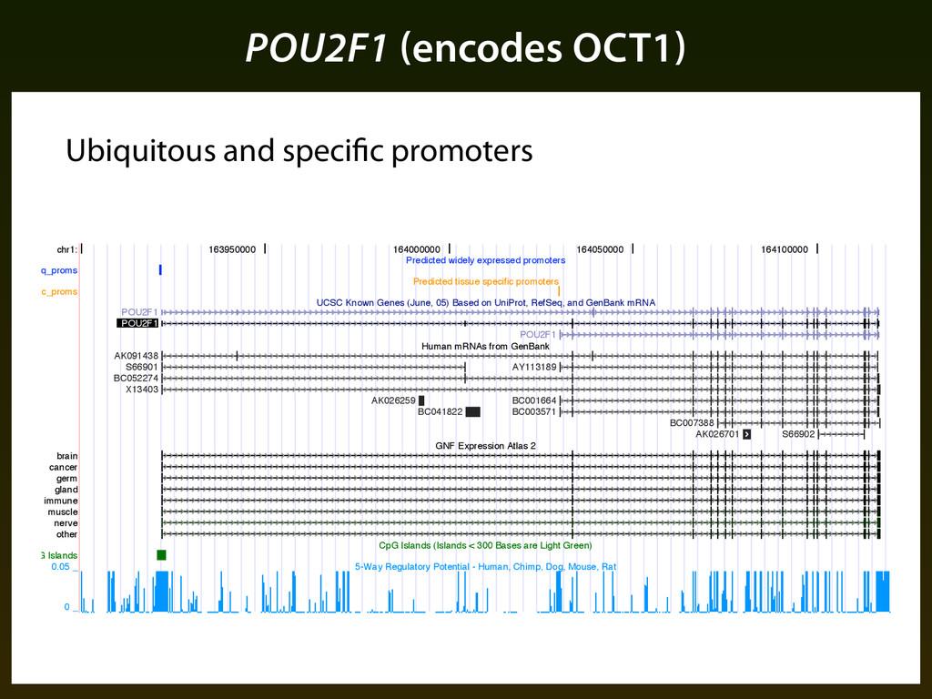 POU2F1 (encodes OCT1) Ubiquitous and specific p...