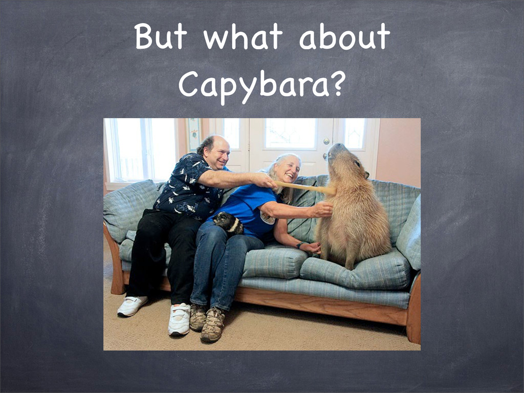 But what about Capybara?