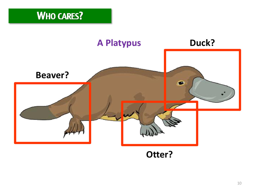 10 Duck? Beaver? Otter? A Platypus WHO CARES?