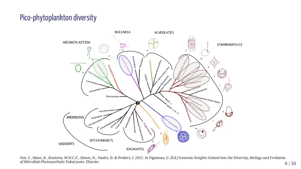 Pico-phytoplankton diversity Not, F., Siano, R....