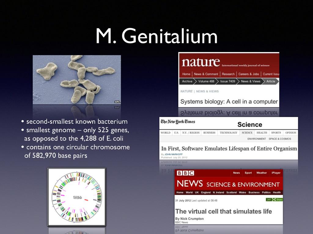 M. Genitalium • second-smallest known bacterium...