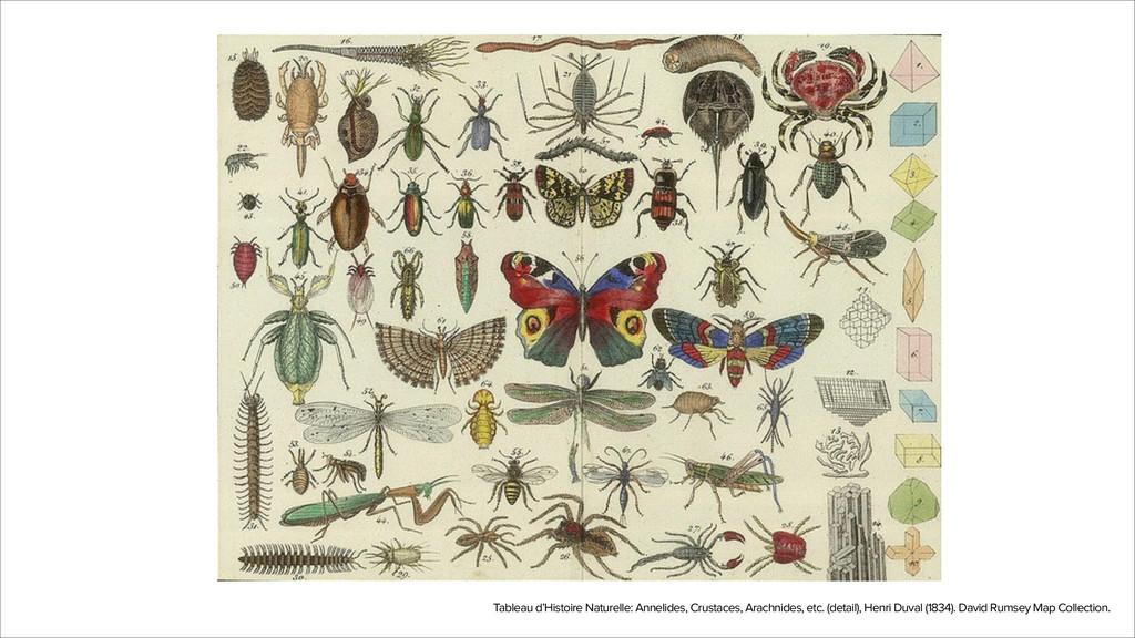 Tableau d'Histoire Naturelle: Annelides, Crusta...