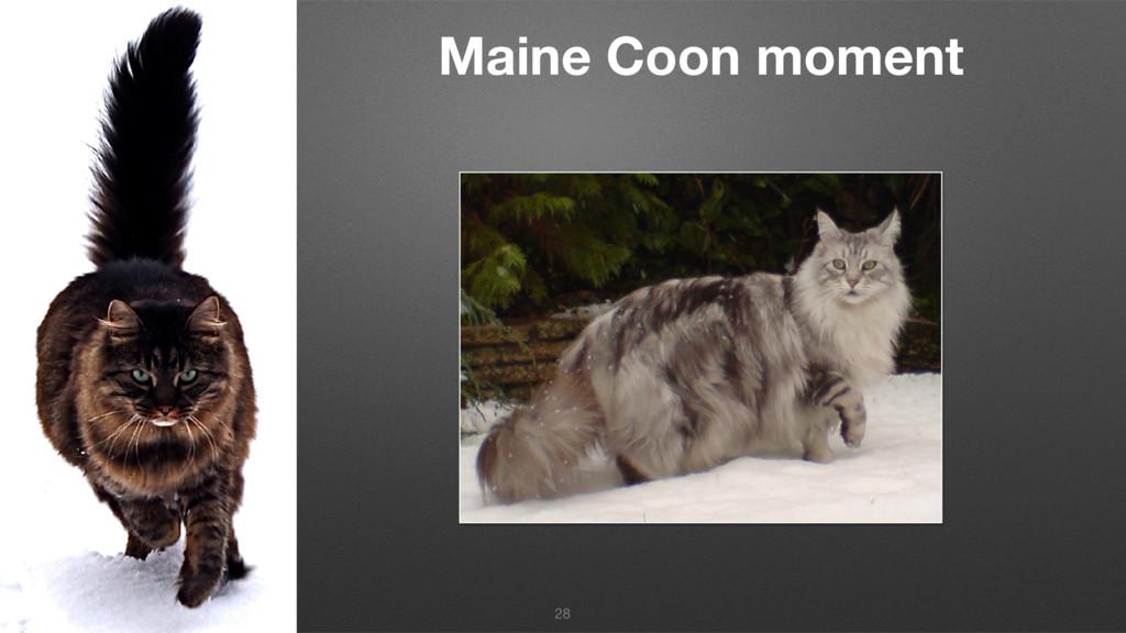 Maine Coon moment 28
