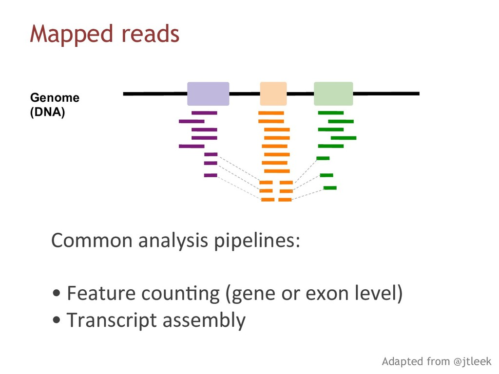 Genome (DNA) Mapped reads Adapted from @jtleek ...