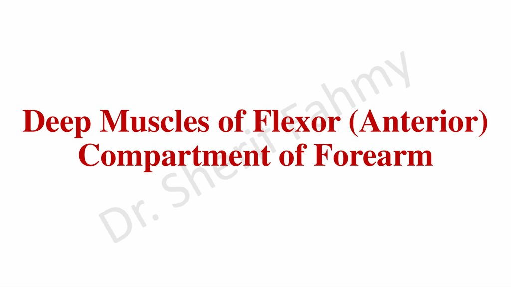 Deep Muscles of Flexor (Anterior) Compartment o...