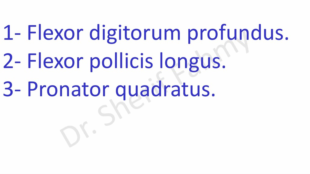 1- Flexor digitorum profundus. 2- Flexor pollic...