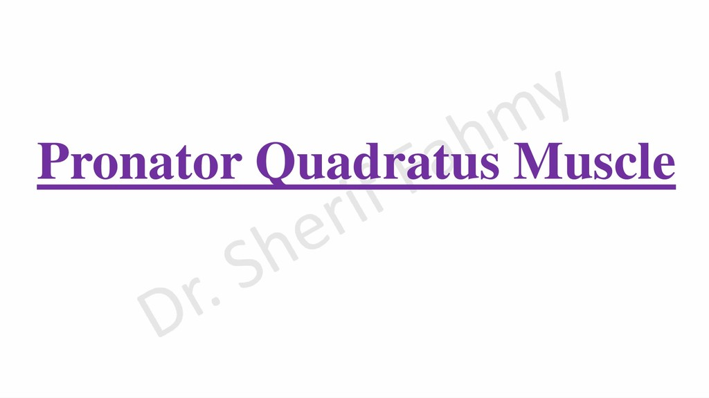 Pronator Quadratus Muscle