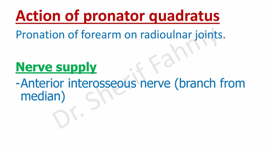 Action of pronator quadratus Pronation of forea...