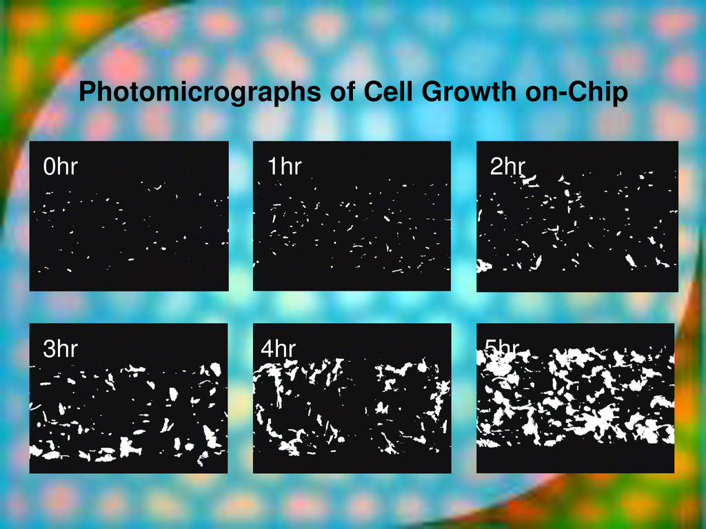Photomicrographs of Cell Growth on-Chip 0hr 1hr...