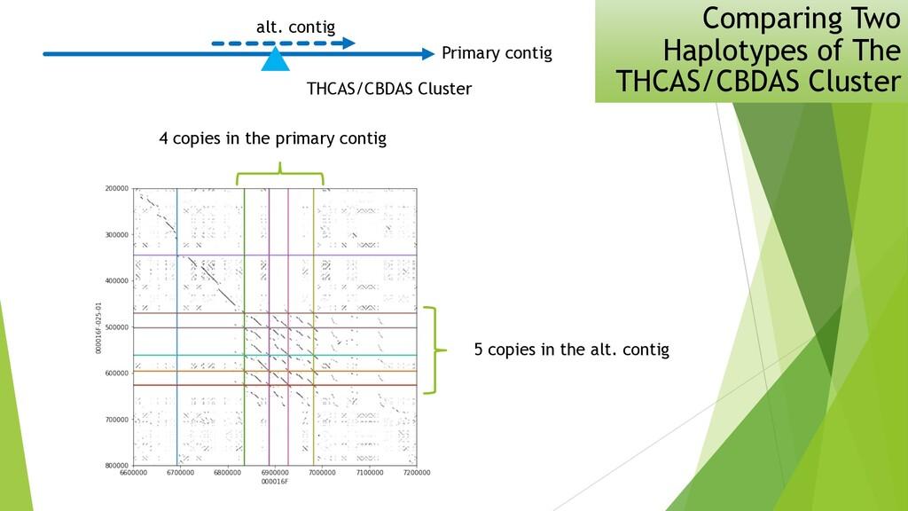 Comparing Two Haplotypes of The THCAS/CBDAS Clu...
