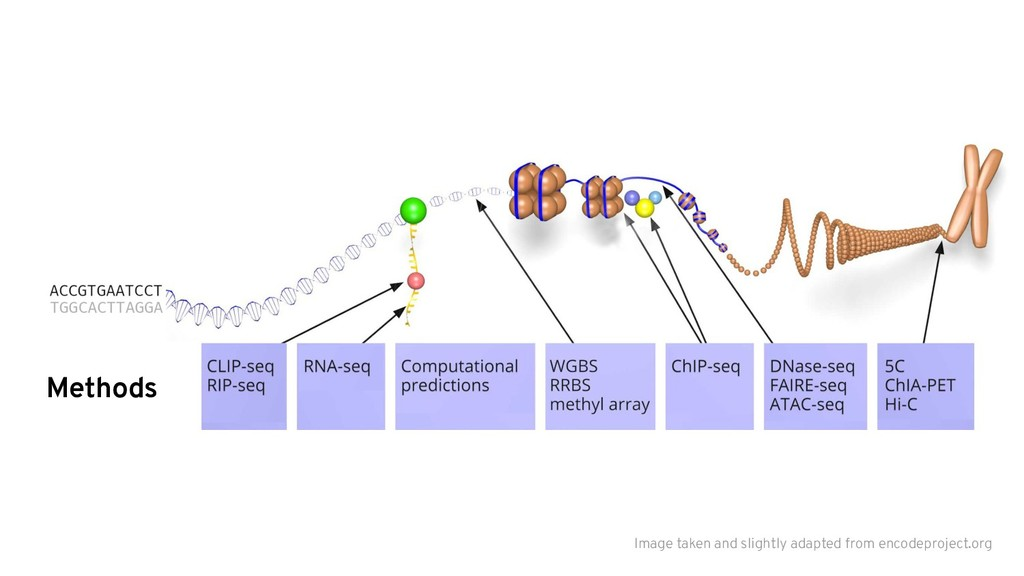 Methods Image taken and slightly adapted from e...